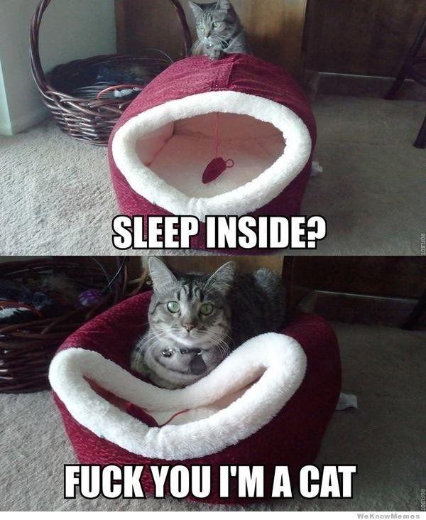 .Mouser!!! lol