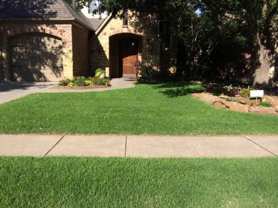 Blog Before And After Lawn Transition St Augustine To Zoysia Soils Alive Inc Organic Lawn Care Dallas Tx Organic Lawn Care Organic Lawn Lawn Care