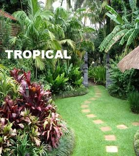 Small Tropical Garden Ideas Garden Design on Landscaping