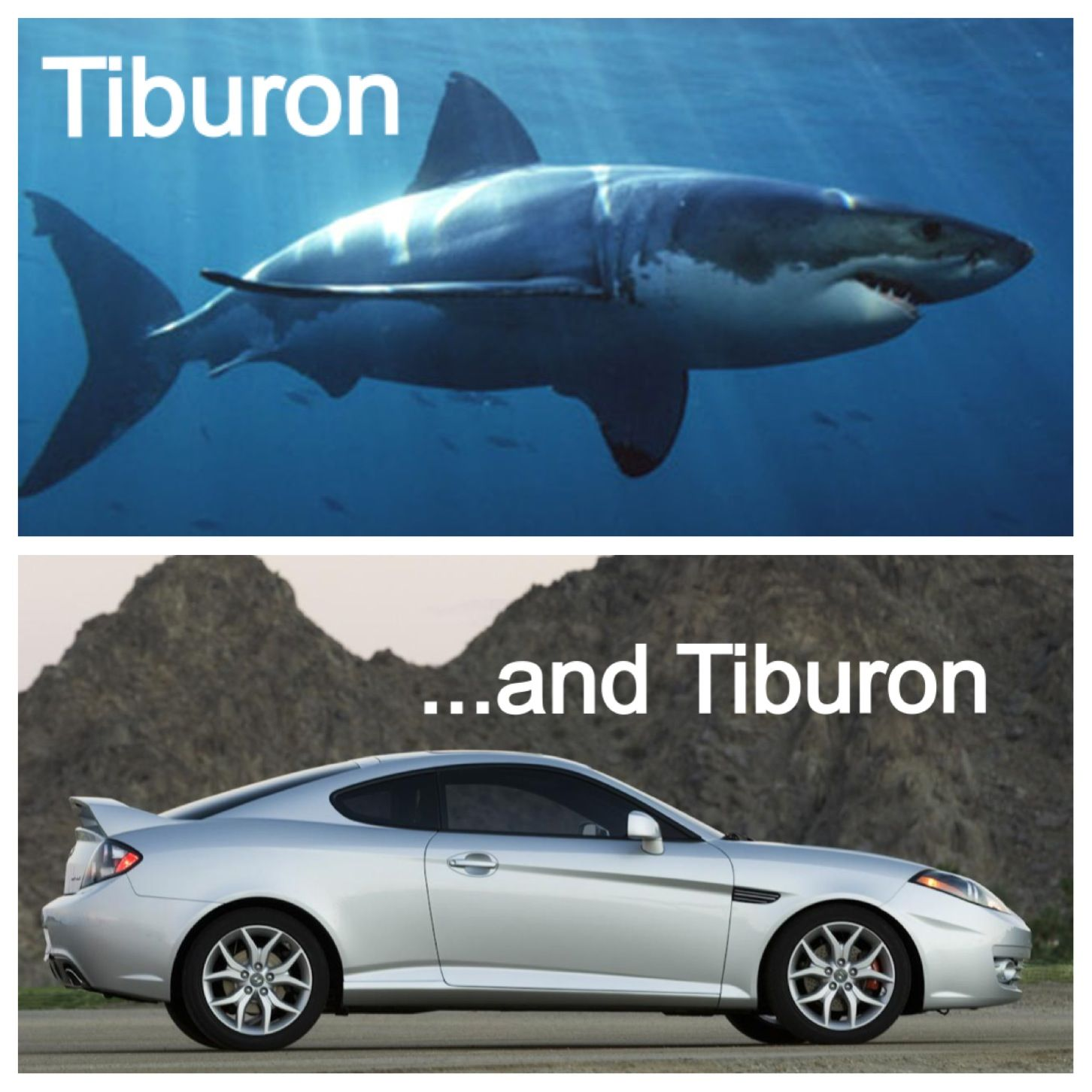 In light of Shark Week ...    #Hyundai #SharkWeek #Tiburon