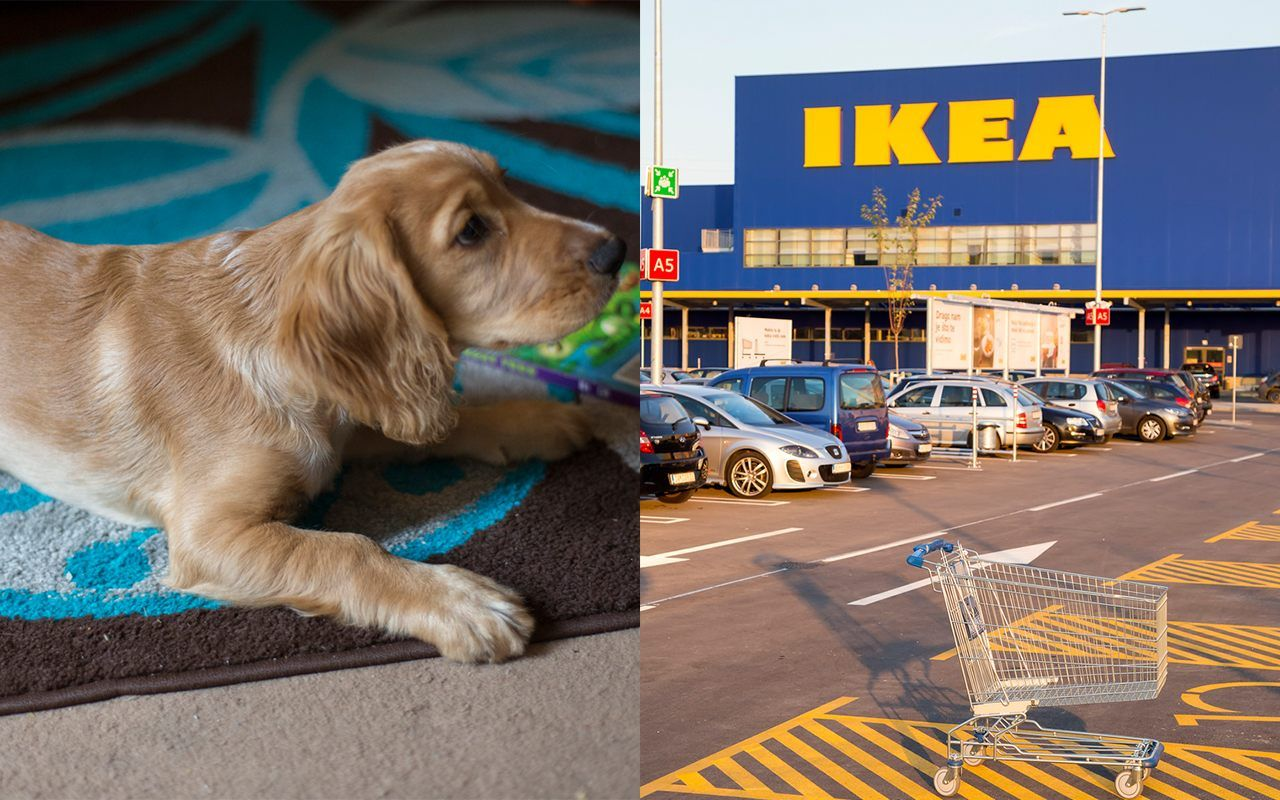 Ikea Praised For Letting Stray Dogs Sleep Inside Store During Winter