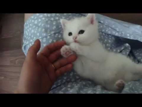 Cute White Kitten Gorgeous And Beautiful Kittens Cutest Super Cute Kittens Cutest Kittens Ever