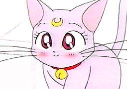 Katze Sailor Moon
