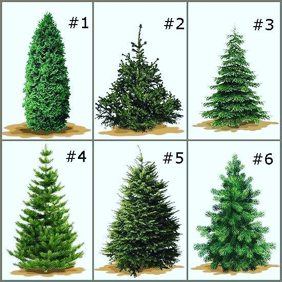 Pick A Number Win A Prize Let S Play A Fun Game Pick A Number No Matter What Tre Types Of Christmas Trees Real Christmas Tree Christmas Decorations