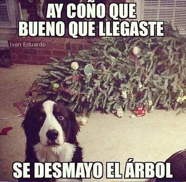 Asustado Memes Perros Imagenes Divertidas De Animales Humor Divertido Sobre Animales