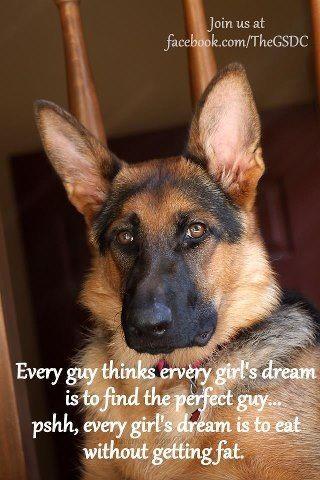 German Shepherd Wisdom Gsd Funny Dog Quotes Love German Shepherd Pictures
