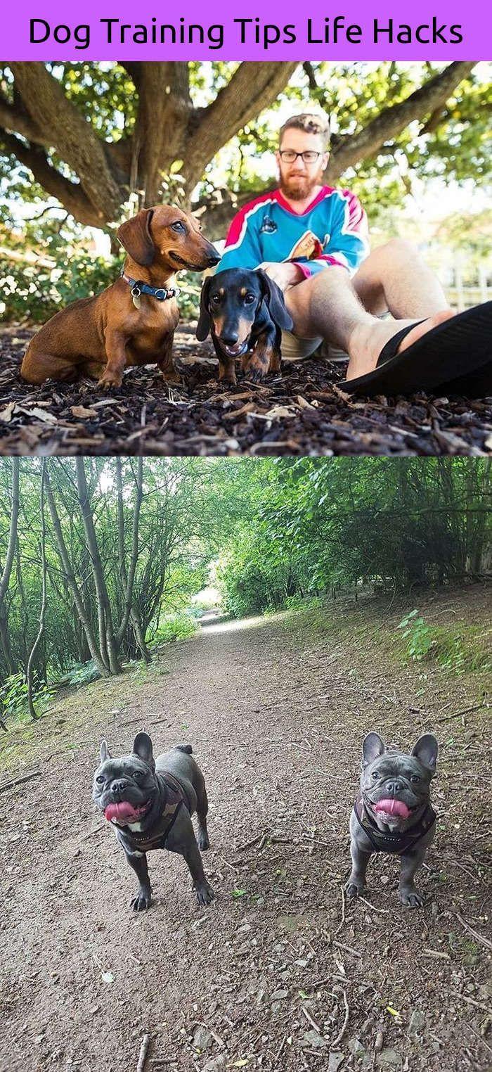 Funny dog agility course fail dog tattoo leg pinterest dog