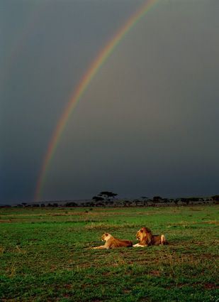 Tanzania Another Thomas D Mangelsen Photo Under The Rainbow World Lion Day Nature Images