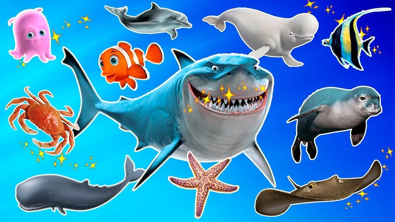 Learn Sea Animals Names And Sounds Real Sea Animals For Kids