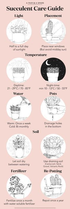 An Illustrated Guide to Caring For Your Succulents #succulents
