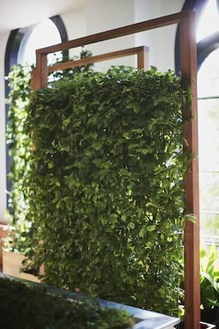 Vertical Green Wall Great For A Natural Privacy Screen