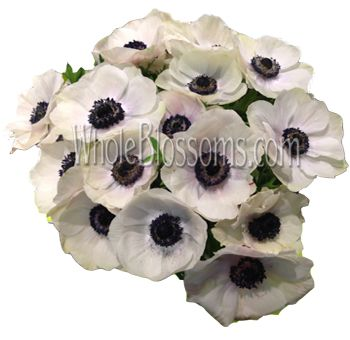 White Anemones With Black Centers White Anemone Flower Anemone Flower White Anemone