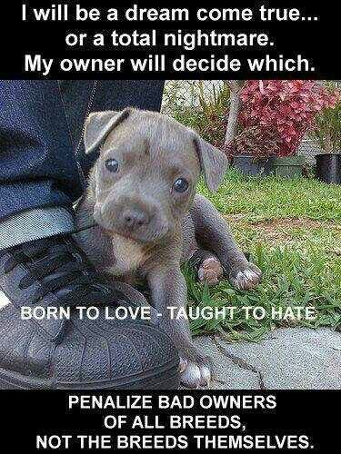 Its The Owners Not The Breeds Animals Cute Animals Pitbulls