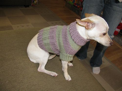 Small dog sweater by brian herzog free pattern on ravelry small dog sweater by brian herzog free pattern on ravelry instructions are very clear dt1010fo