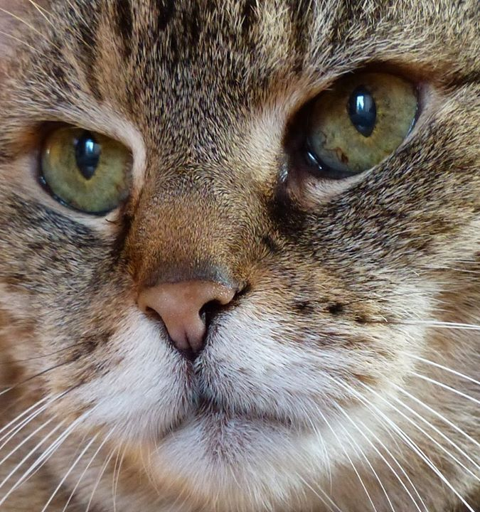 """""""Always, the cat remains beyond the limits we try to set for him in our blind folly.""""--Andre Norton"""