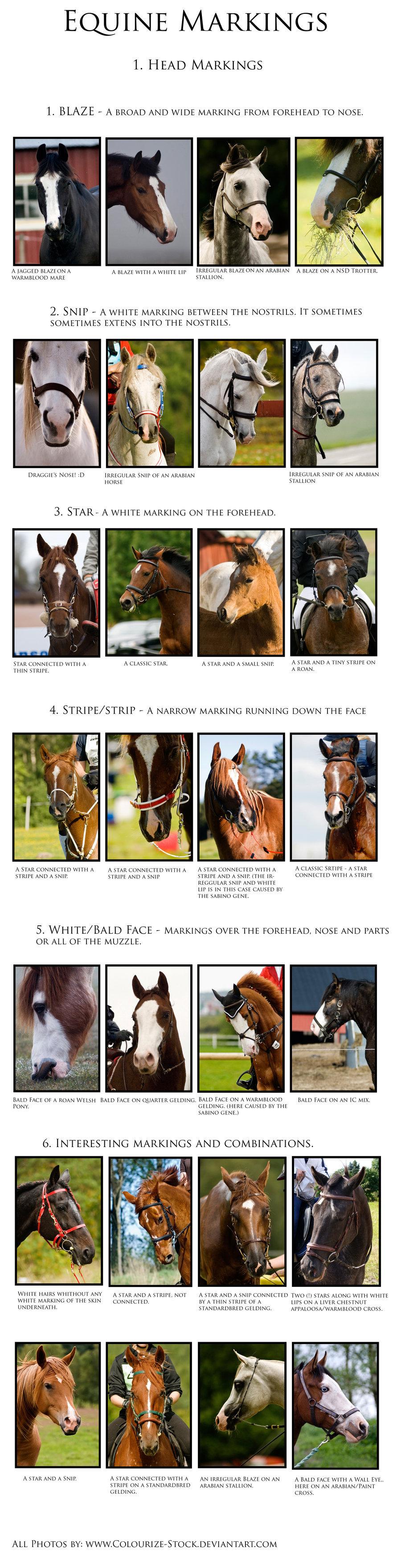 Facial Markings Ref Sheet Horse Coloring Beautiful Horses Wild Horses Mustangs [ 3520 x 900 Pixel ]