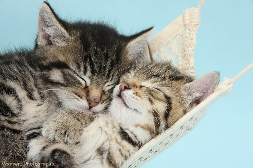 5 Amazing Facts About Your Cat S Sleeping Habits Kittens Cutest Cute Animals Cute Cats