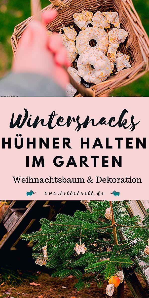 Photo of Hühner halten im Garten – Weihnachtsbaum für Hühner / Wintersnacks