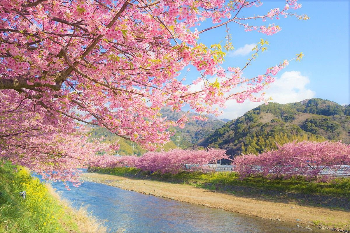 Top 10 Things To Do In Japan In February Japan Web Magazine Cherry Blossom Japan Cherry Blossom Background Cherry Blossom