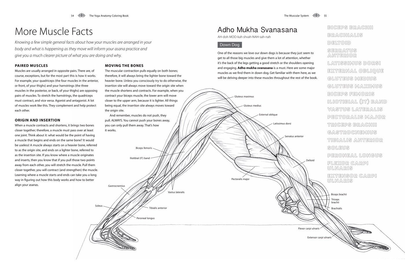 The Yoga Anatomy Coloring Book A Visual Guide To Form Function And Movement Kelly Solloway Samant Anatomy Coloring Book Coloring Books Words Coloring Book