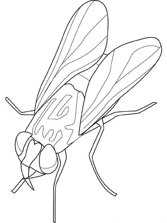 Insekten Malvorlagen | insekten | Pinterest | Insekten ...