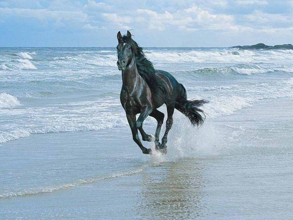 Good Wallpaper Horse Ocean - 1c5000d89234a714d5eadcfd6891a6fc  You Should Have_569142.jpg