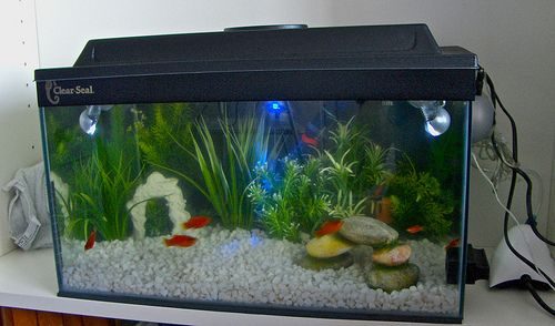 Cheap Fish Tank Decorations (500×294)