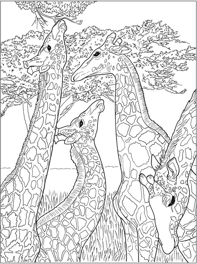Creative Haven Beautiful Nature Designs Coloring Book -- 6