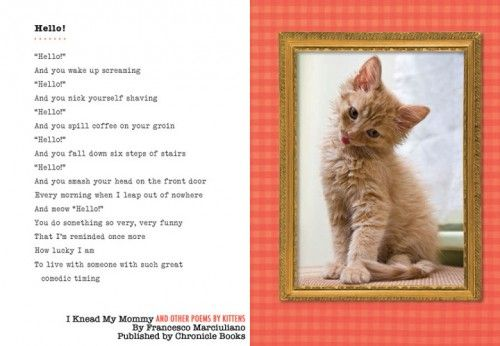 Review I Knead My Mommy And Other Poems By Kittens The Conscious Cat Kittens Cats Poems