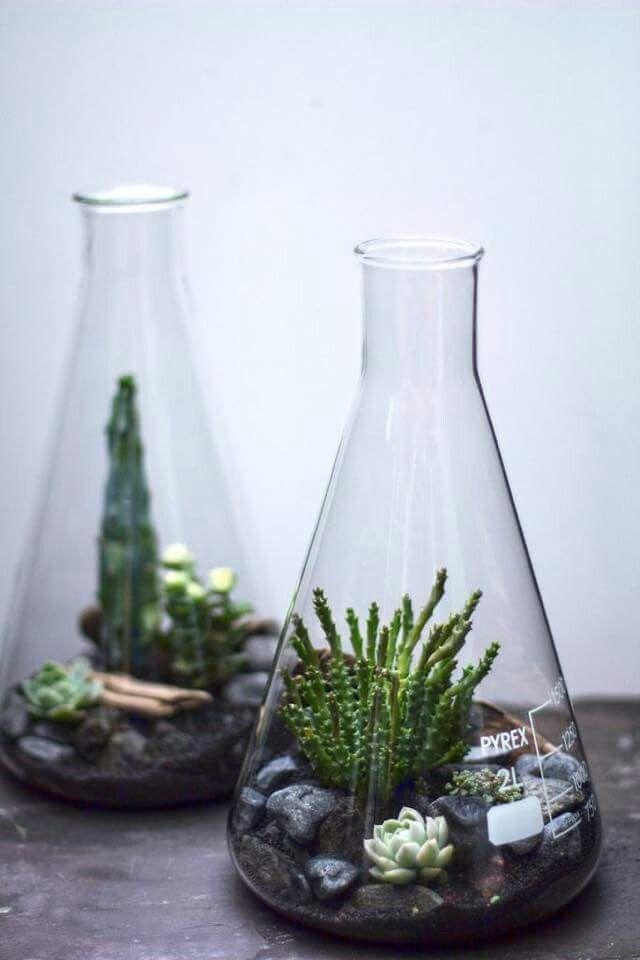 Mini Ecosystem With Succulents Mason Jars Cloche Vintage Glass