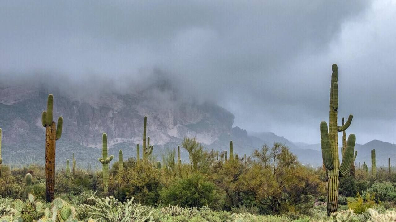 Brr! Has this winter been colder than normal in Phoenix