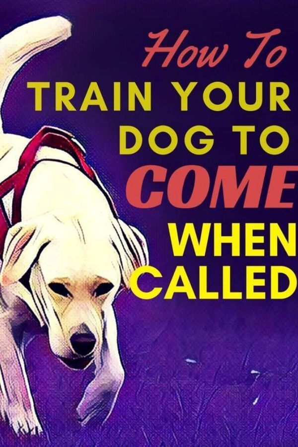 How To Get Your Dog To Come When Called Dog Training Dog