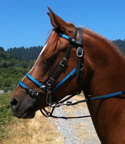 Bitless bridles: What, why and how - Horse & Hound