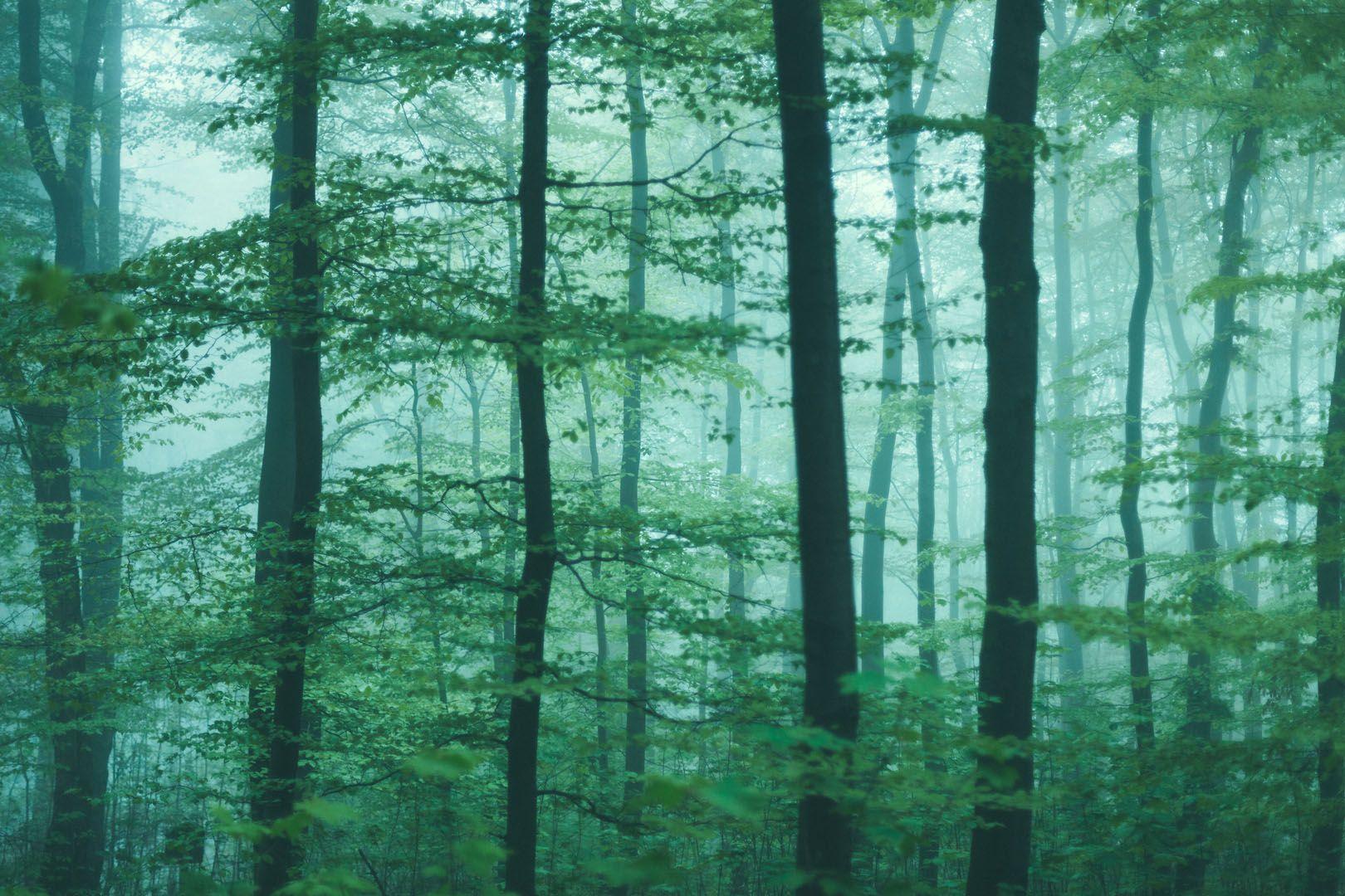 Wald und Wetter 04 – Bäume, Ebenen, Tiefe, Nebel. Die kurze Schärfe der Bilder zeigt auf einzelne Exemplare mit dem Finger. So sieht man Bäume vor lauter Wald. 2014, MD   © www.piqt.de   #PIQT