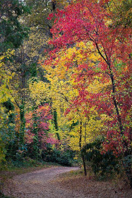 Fall Colors In Bidwell Park Chico Ca Bidwell Park Chico California Chico