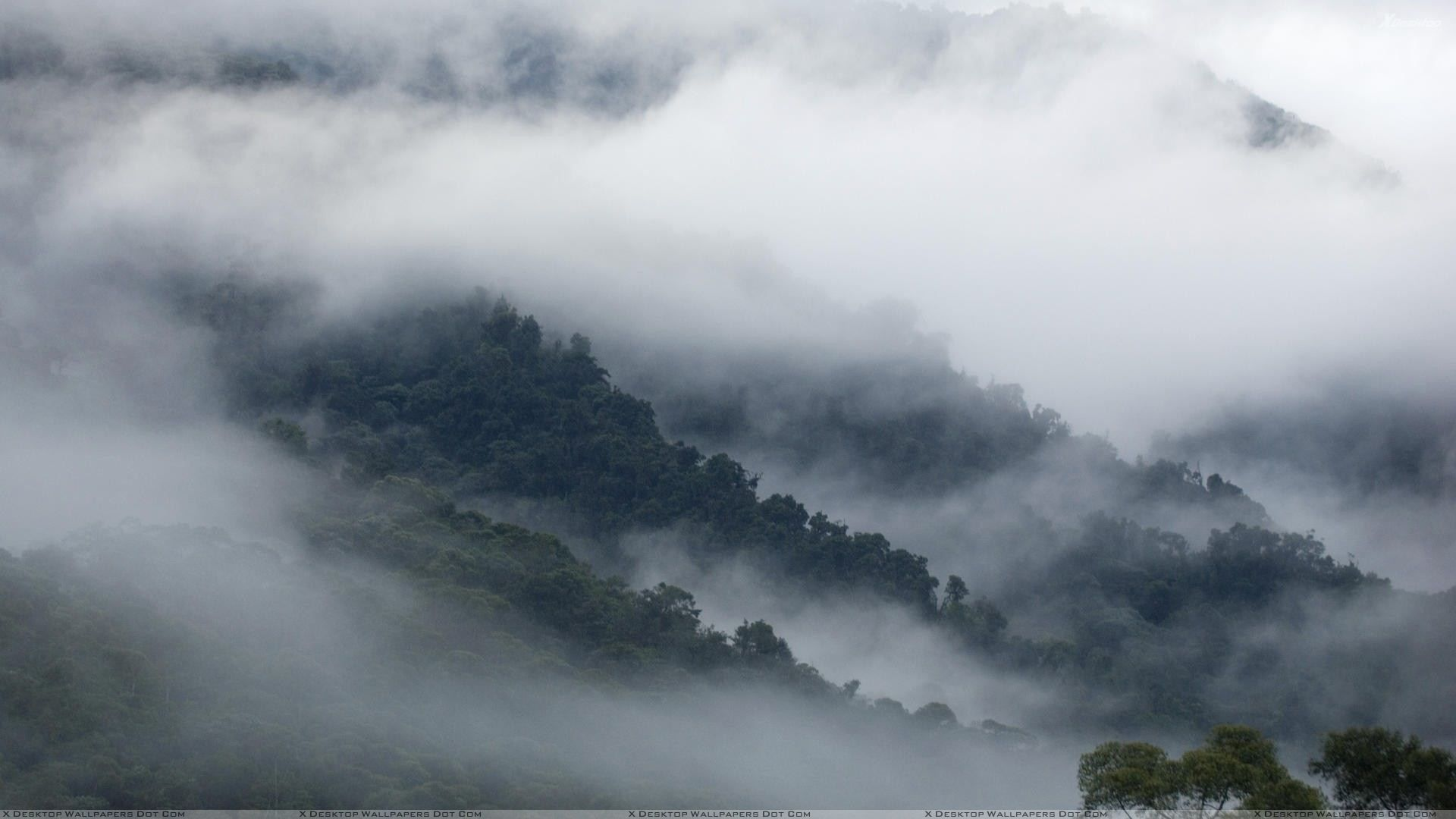 Simple Wallpaper Mountain Fog - 1c535e7e3fcbfa830ecaf6e41ed15831  Image_798710.jpg