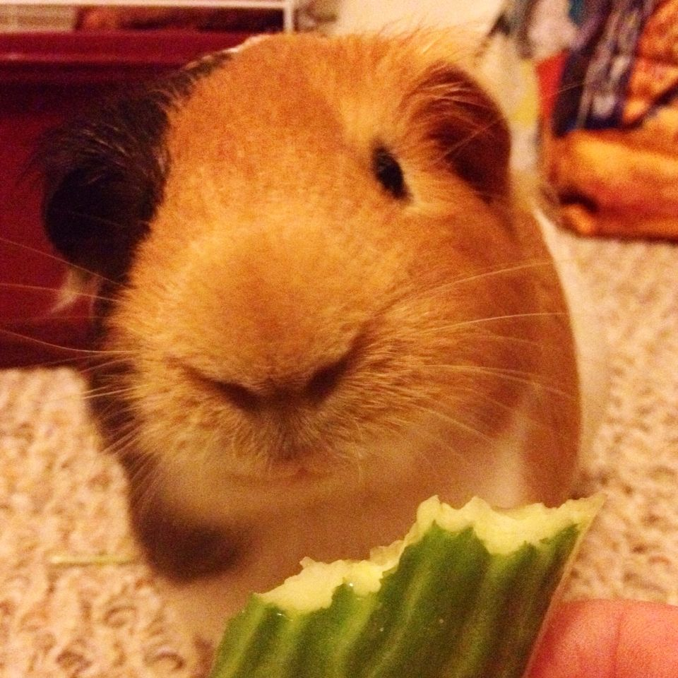 Smiling | Roger H. Rice, guinea pig extraordinaire. | Pinterest