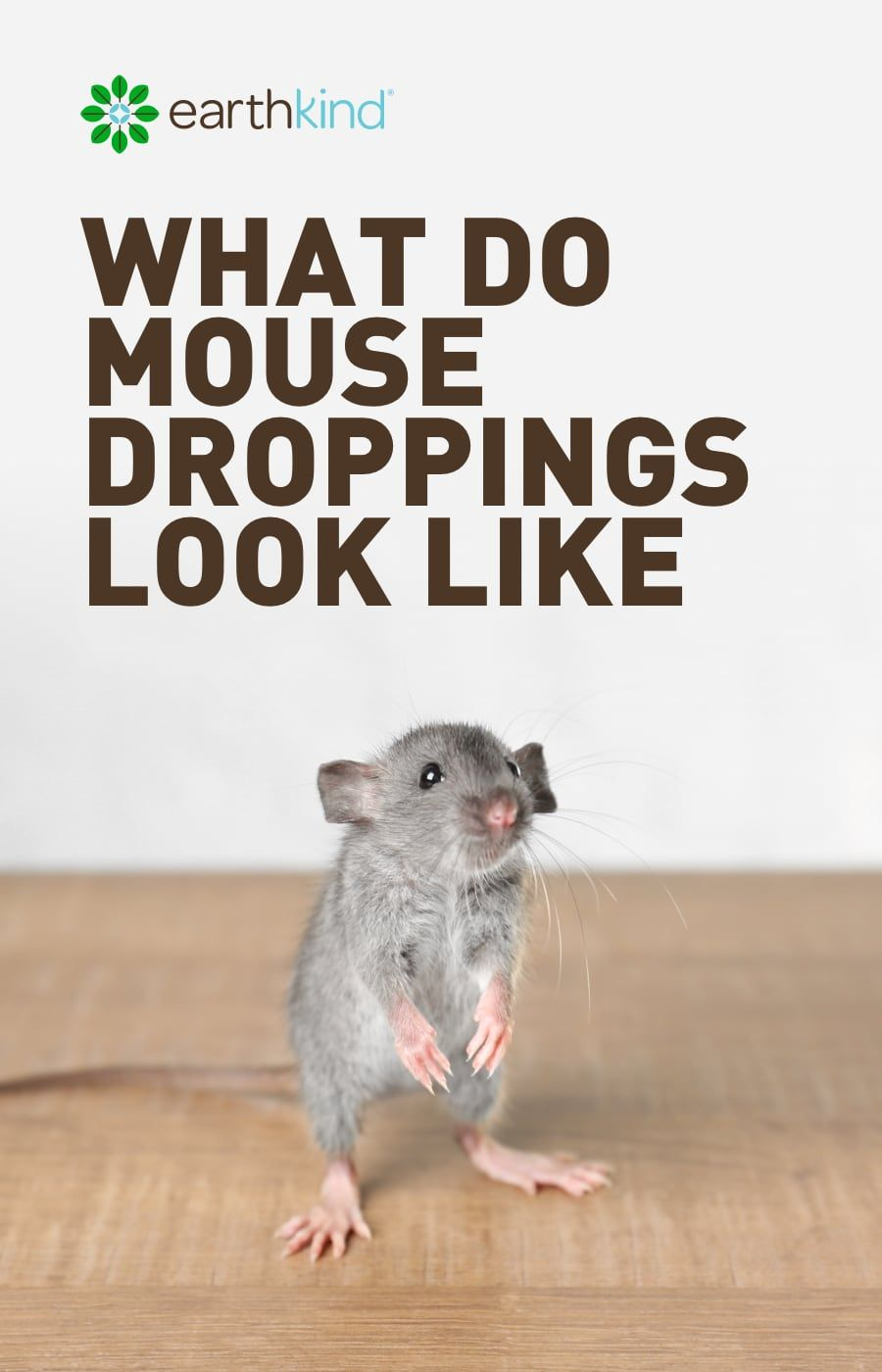 What Do Mouse Droppings Look Like How To Get Rid Of Mice Getting Rid Of Mice Mice Repellent Rodent Droppings