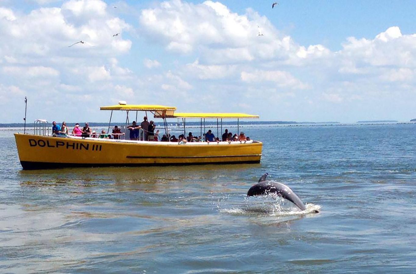 3. Dolphin Tour Would you like to experience the graceful, playful, and of course amazing wild bottlenose dolphins that call Tybee Island their home?  You can book a tour with Captain Mike or Captain Derek and enjoy a memorable dolphin adventure in the waters of Tybee Island.  Both boat tour companies also provide sunset cruises and much more.  Follow the links for more information.