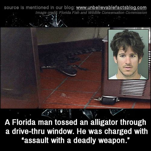 "A Florida man tossed an alligator through a drive-thru window. He was charged with ""assault with a deadly weapon."""