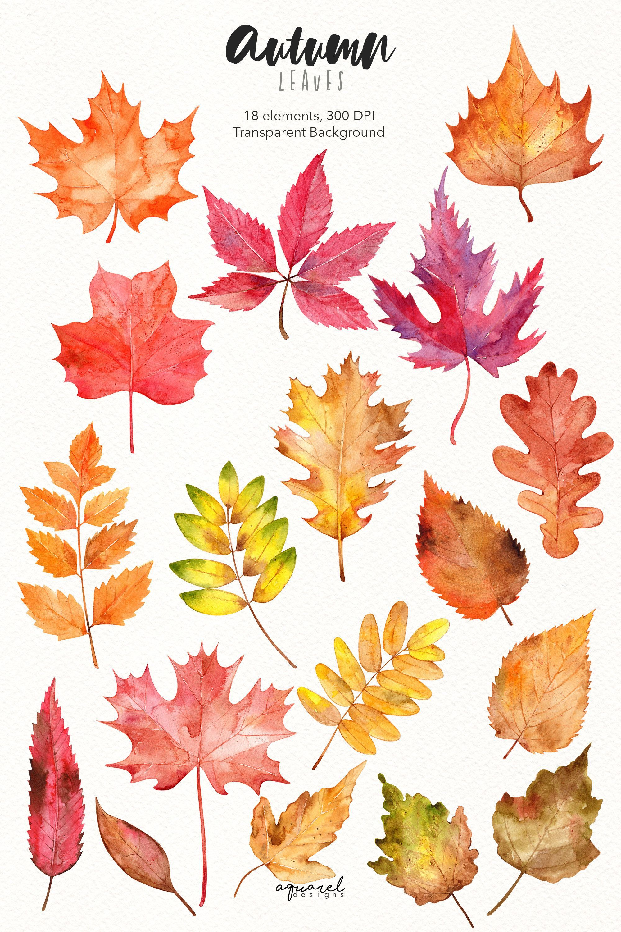 Watercolor Autumn Leaves Clipart Hand Painted Fall Leaf Autumn