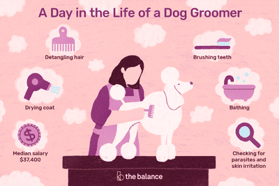 Pet Sitter Job Description Salary Skills More Dog Groomers Groomer Pet Sitters