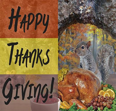 What Are You Thankful For Gutters That Never Clog Guaranteed Don T Be A Turkey Give Thanks Get Leafguard Gutter Protection Seamless Gutters Rain Gutters
