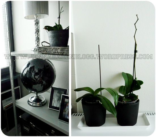 home decor, black and white, globe, orchids