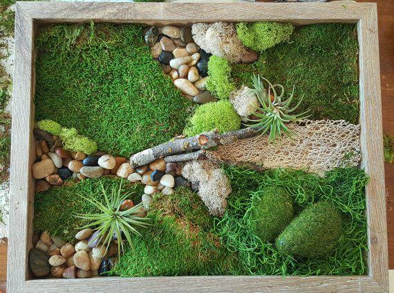 Moss Wall Art Live Plant | Moss garden | Pinterest | Moss wall art ...