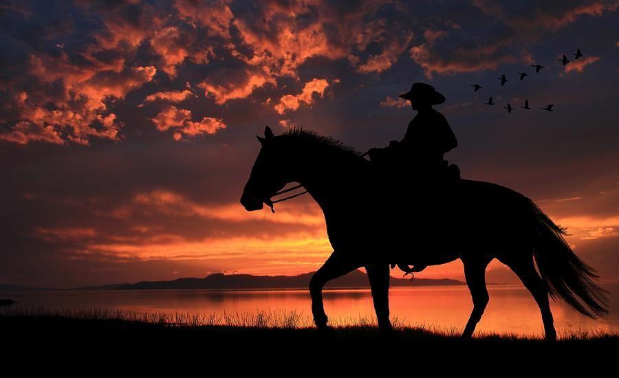 Sunset Cute Horses Wallpaper