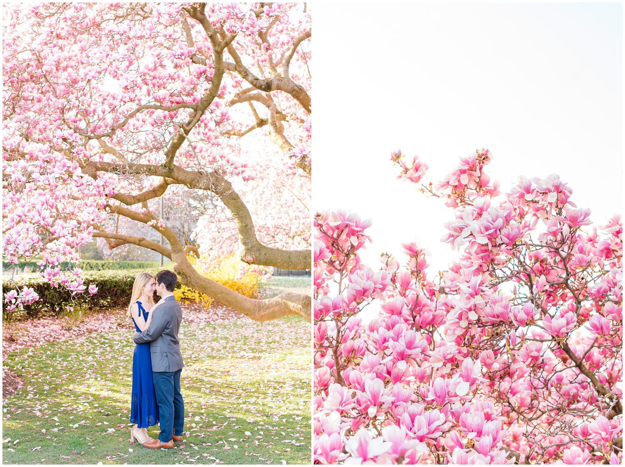 Maya And Alex A Sunrise Cherry Blossom Engagement Session At The Tidal Basin In Washington D C Caitkramer Com Cherry Blossom Engagement Session Magnolia Blossom