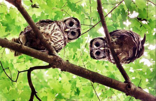 Hello down there #owl #bird #animal
