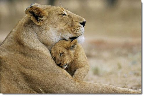 animal mothers with babies | Mother & Child Reunion: Too-Cute Photos of  Mother & Baby Animals ... | Animals beautiful, Super cute animals, Funny  animals
