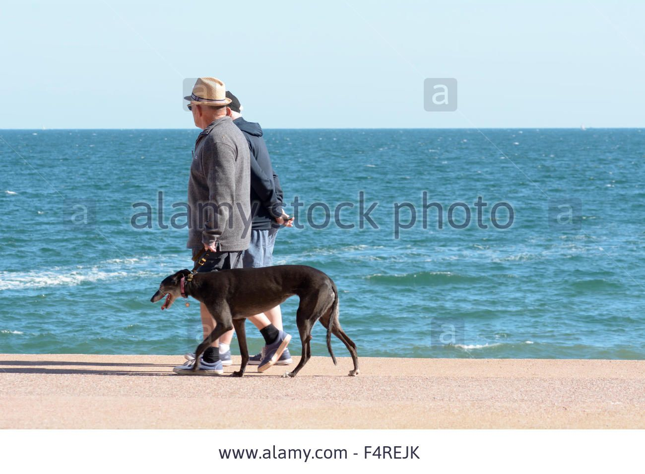 Elderly Couple Walking Their Greyhound Along The Steps At ...